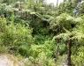 Panorama1030877.tif